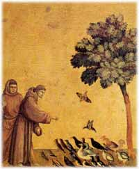 tarot numerologie saint francois d'assises et les tourterelles